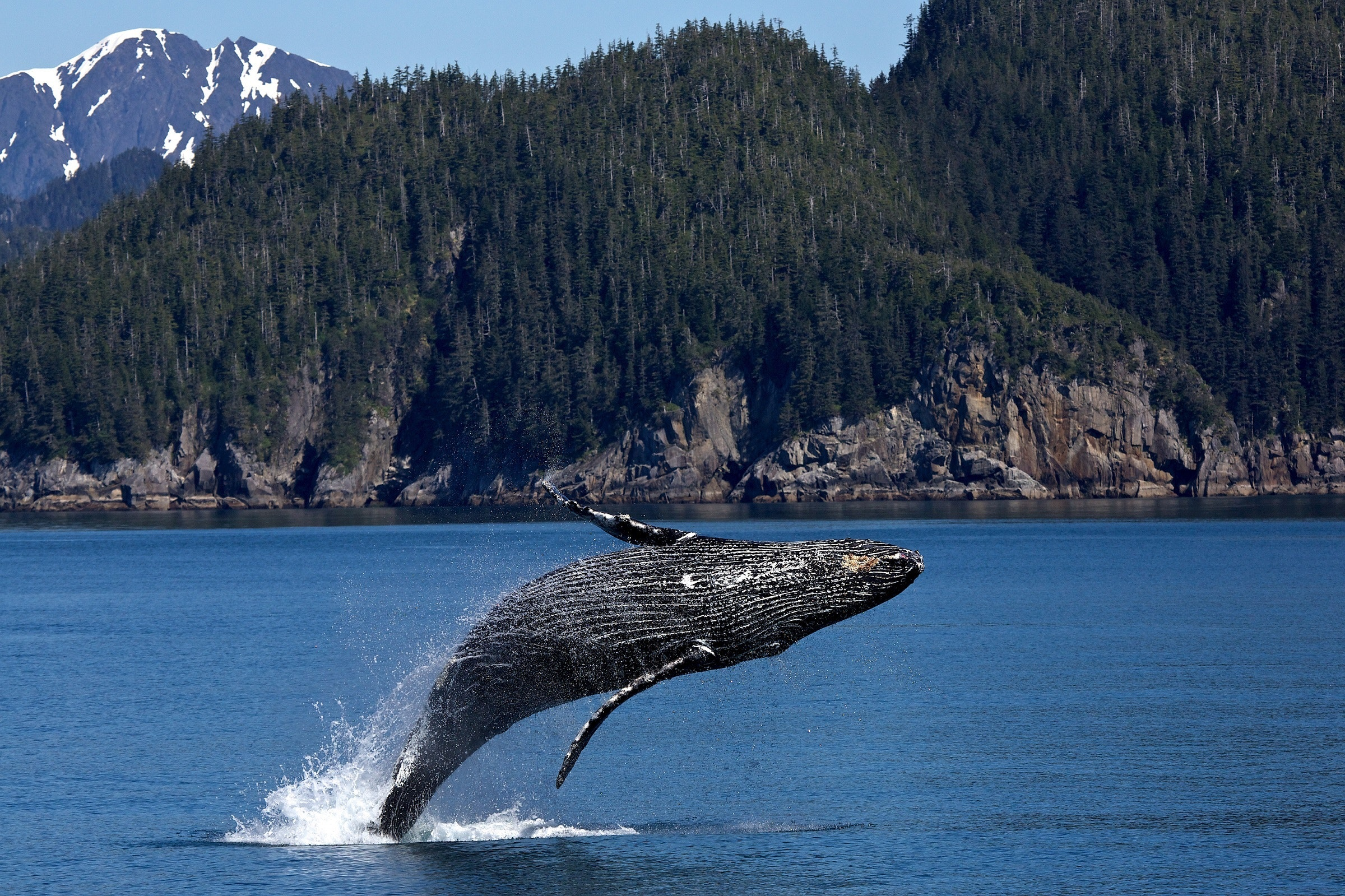 biomimicry - baleinwalvis