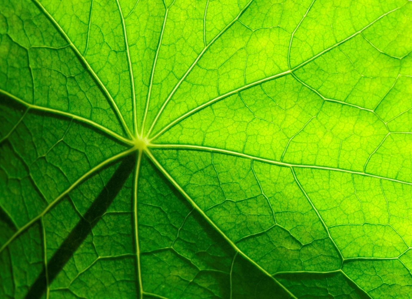 biomimicry - stroming blad